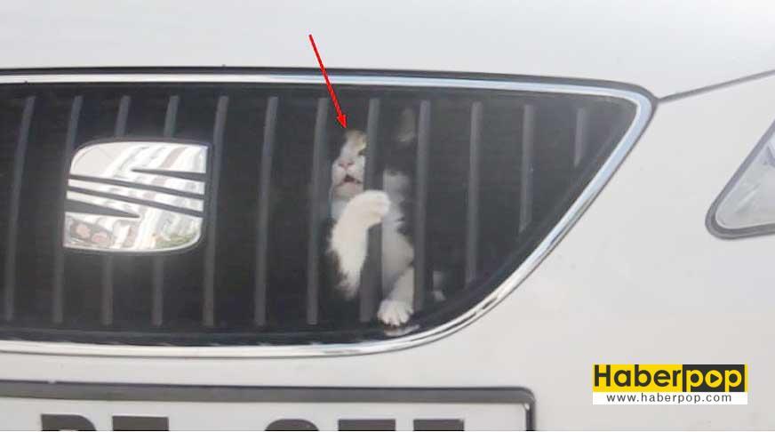 arabaya-sikisan-kedi-boyle-kurtarildi-videosu-izle
