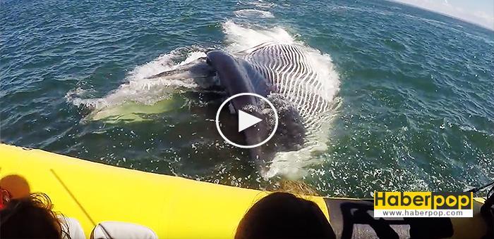 Dev-balina-turistlerin-teknesini-parçalamak-üzereydi-izle