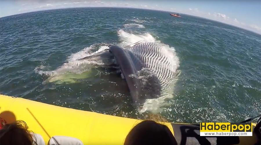 Dev-balina-turistlerin-teknesini-parçalamak-üzereydi