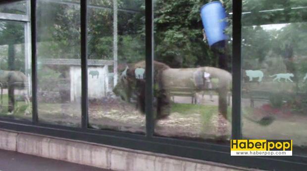 Hayvanat-bahçesindeki-müzik-yayını-aslanları-strese-soktu-haberi