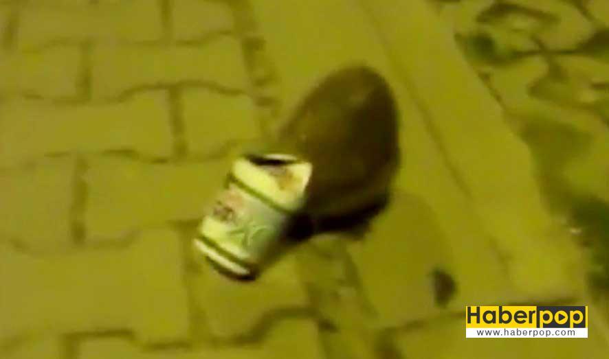 Kirpinin-yoğurt-kabıyla-imtihanı-güldürdü-videosu