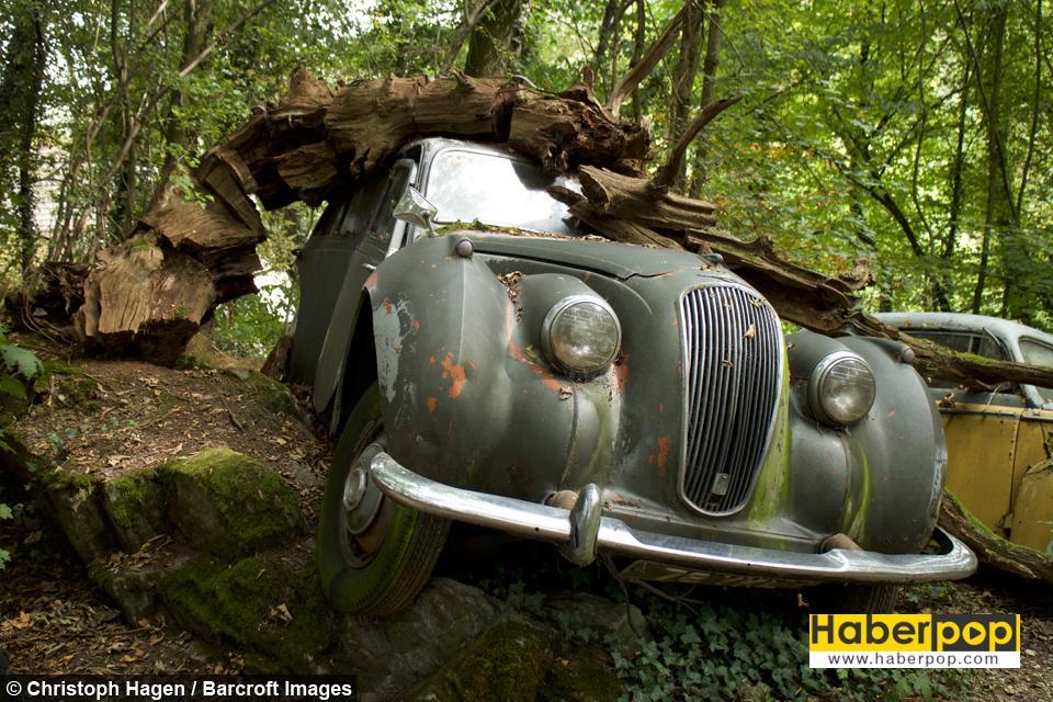 Ormanın Ortasında Milyon Dolarlık Araba Mezarlığı Haberpop