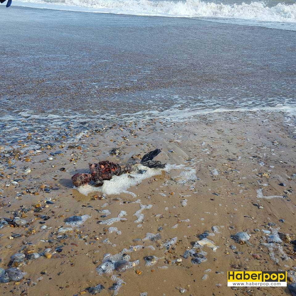 olu-deniz-kizi-sahile-vurdu-iddiasi-gizemli-haber