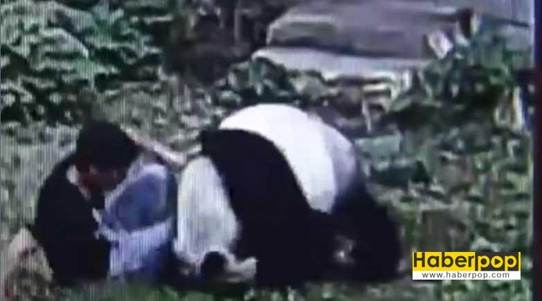 panda-kafesine-izinsiz-giren-adami-boyle-kovaladi