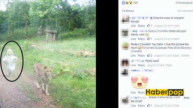 Vahşi-çitayı-kovalayan-çocuk-tıklanma-rekoru-kırıyor-ilginç-haberler