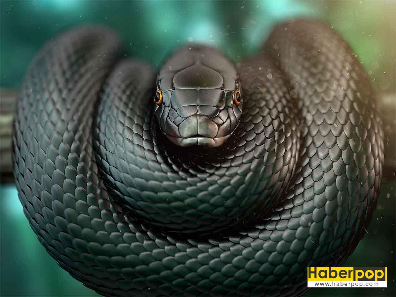 En zehirli yilanlar: Kara mamba - Black mamba