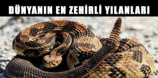 Dünyanın en zehirli ve tehlikeli yılanları