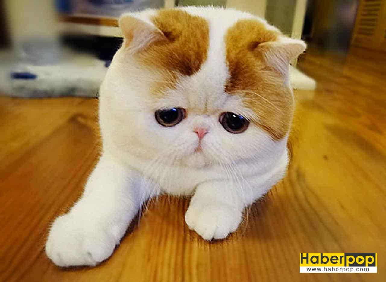İnternet aleminin en ünlü 10 kedisi