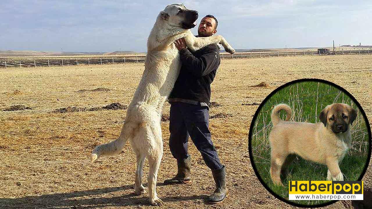 Köpeklere Sarılmak Doğru Değil