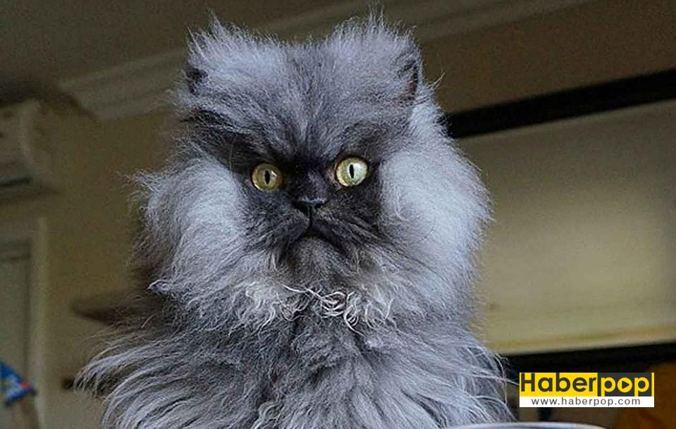 Kediler En Guzel Kedi Resimleri Komik Kedi Videolari Komik Kedi