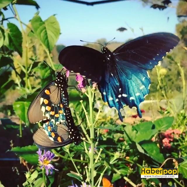 kelebekleri-kurtaran-adam-1-HaberPop