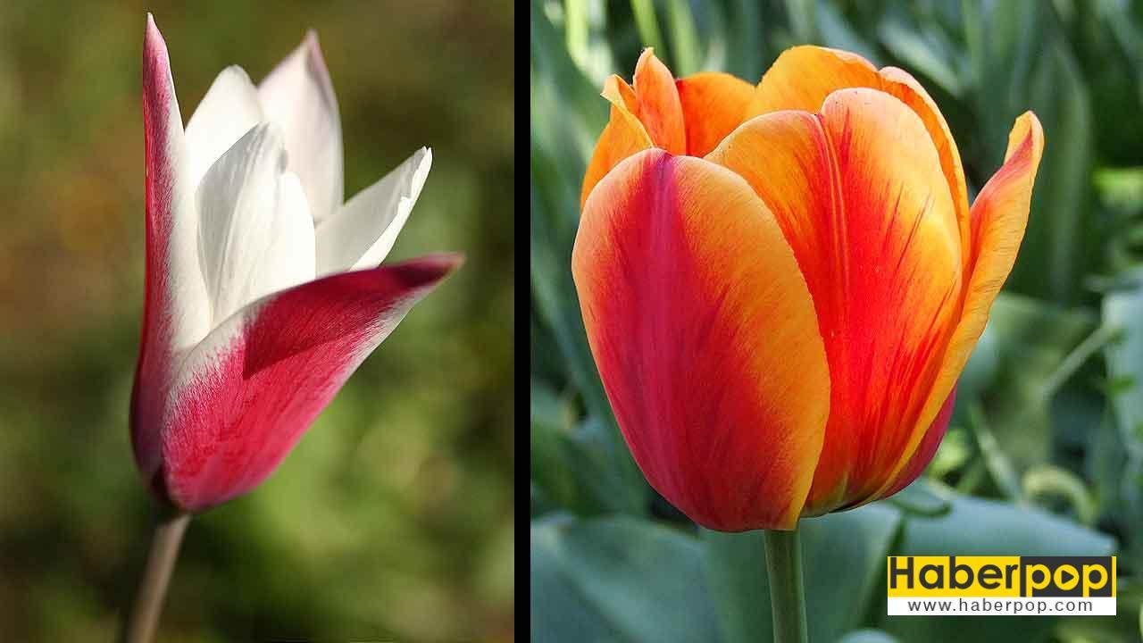 En Güzel Yaz Düğünü çiçekleri Isimleri Ve Anlamları Haberpop