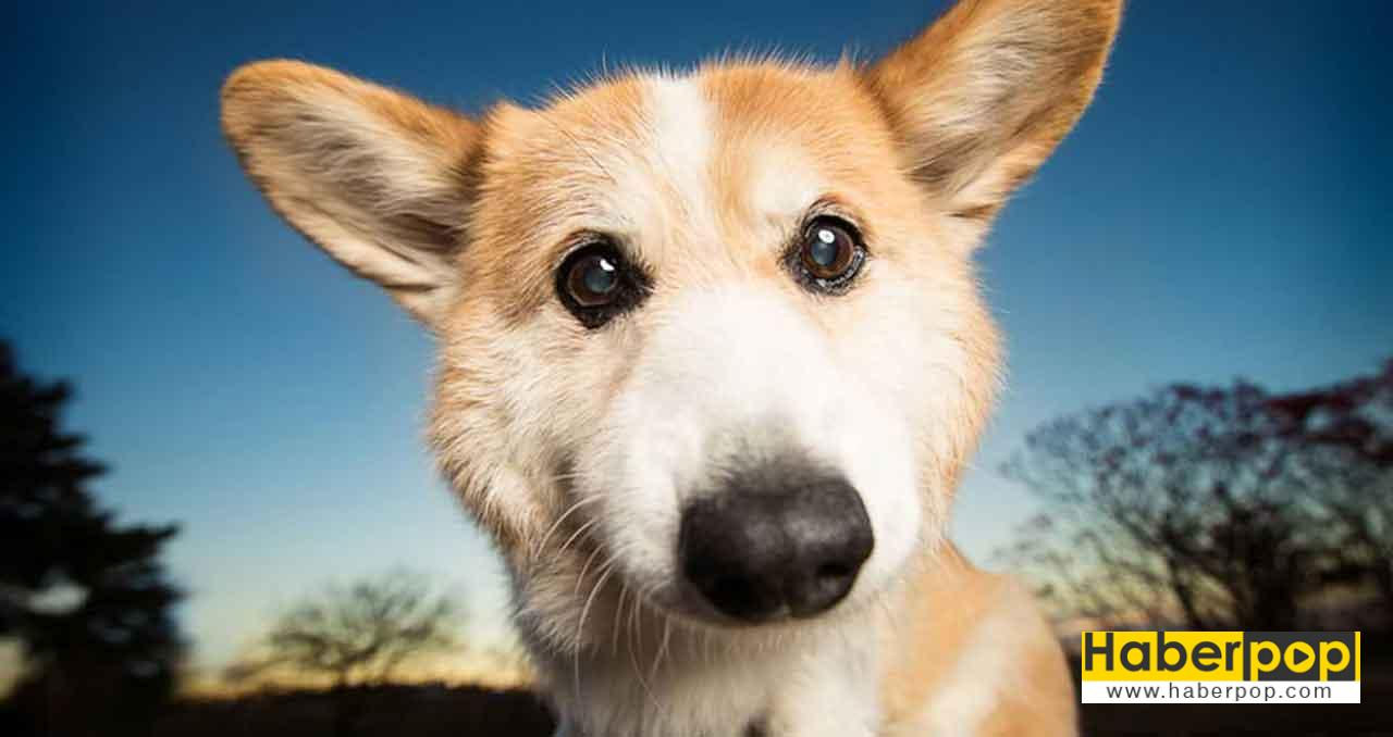Rüya yorumu: Bir köpeğin rüyasında görülen köpek nedir
