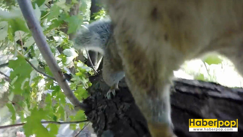 sincap-kamerayı-çaldı-video